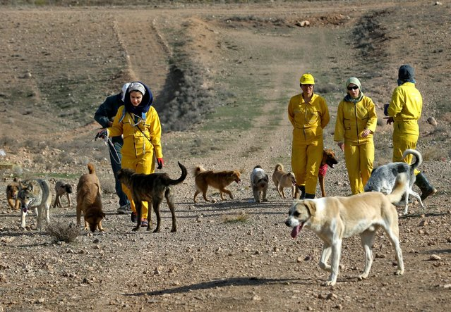 In this Friday, December 5, 2014 photo, Iranian volunteers take dogs for a walk at the Vafa Animal Shelter in the city of Hashtgerd 43 miles (73 kilometers) west of the capital Tehran, Iran. (Photo by Vahid Salemi/AP Photo)