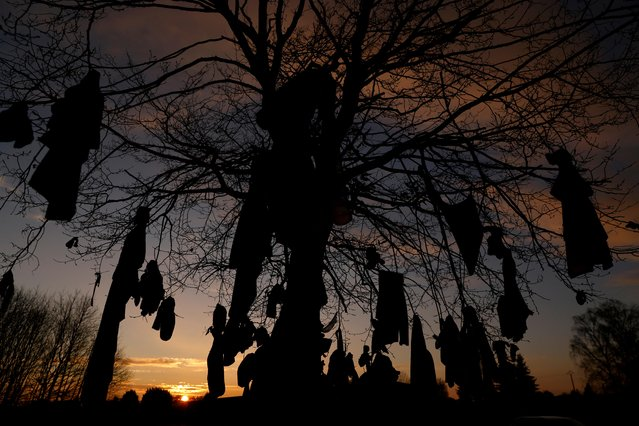 "A view of ""L'arbre a loques"", a ""healing"" tree to which people attach cloths as a ritual for good health according to Celtic tradition, during the coronavirus diesease (COVID-19) pandemic in Hasnon, France on December 6, 2020. (Photo by Pascal Rossignol/Reuters)"