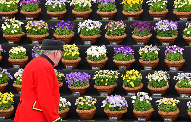 A Chelsea Pensioner views Viola on display at the RHS Chelsea Flower Show in London, Britain on May 21, 2018. (Photo by Toby Melville/Reuters)