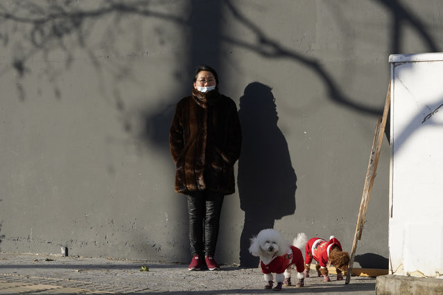 A woman wearing mask to help protect herself from the coronavirus stands in the sun as she walks her dogs in Beijing on Friday, January 8, 2021. With next month's Lunar New Year travel rush looming, the government is telling people to stay put as much as possible and not travel to or from the capital Beijing. (Photo by Ng Han Guan/AP Photo)