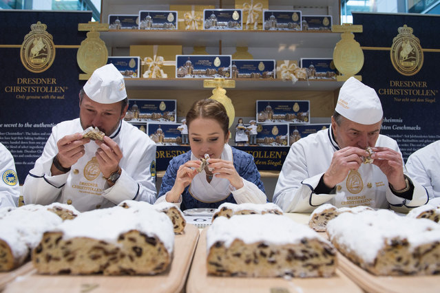 Master Bakers Andre Bernatzky (l) and Bernd Richter as well as Stollen Girl Marie Lassig holding up a piece of Stollen (fruit loaf) during a public Stollen examination in Dresden, Germany, 11 November 2016. On a total of 17 examination days, Stollen are tried, tested and ranked by taste, smell and lookds. Only fruit loafs carrying the Stollen seal are allowed to be sold as Dresden Christ Stollen. (Photo by Sebastian Kahnert/EPA)