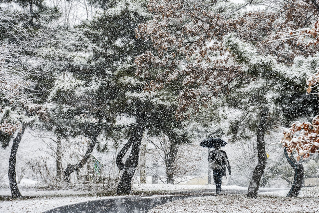 A pedestrian walks a wooded path between Fenton street and train tracks as a  winter storm begins on January, 21, 2015 in Silver Spring, MD. (Photo by Bill O'Leary/The Washington Post)