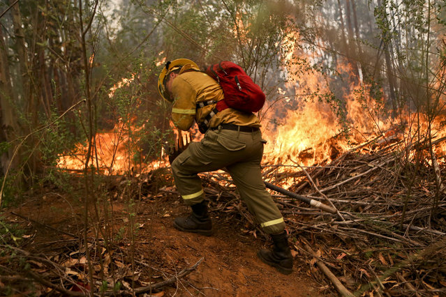 A firefighter digs a trench in an effort to stop the advancement of a wildfire in the Florida community of Concepcion, Chile, Friday, January 27, 2017. (Photo by Esteban Felix/AP Photo)