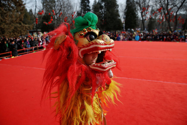 A young performer in lion dance costume bites his lips before the show at the Longtan park as the Chinese Lunar New Year, which welcomes the Year of the Rooster, is celebrated in Beijing, China January 29, 2017. (Photo by Damir Sagolj/Reuters)