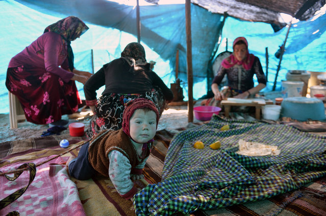 Sarikecili Yoruks, nomadic Turks of Anatolia, are seen at their tents as preparations are made for migration to highlands in Karaman ahead of summer, at Silifke district of Mersin, Turkey on March 26, 2019. Sarikecili Yoruks continuing their lives at tents in a forest near beach in Silifke, not giving up their traditions despite of developing technology. They provide their foods from butternuts and cheese made by their goats' milk. Yoruks, also Yuruks or Yorouks, not only make their bread but also produce agricultural product in tiny fields. (Photo by Sezgin Pancar/Anadolu Agency/Getty Images)