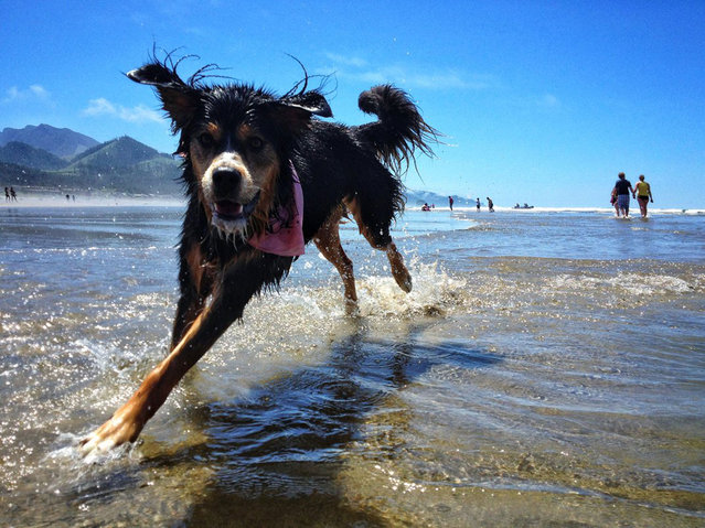 """I risked life and phone"", says Wilke of his image of Leeloo at Cannon Beach. Cannon Beach, Oregon. (Photo by Chaz Wilke/Smithsonian.com)"