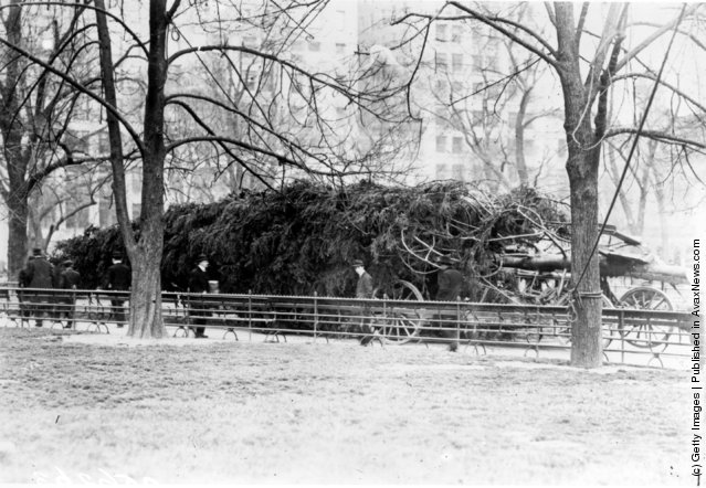 1913: New York's Christmas tree for the homeless waiting to be erected in Madison Square