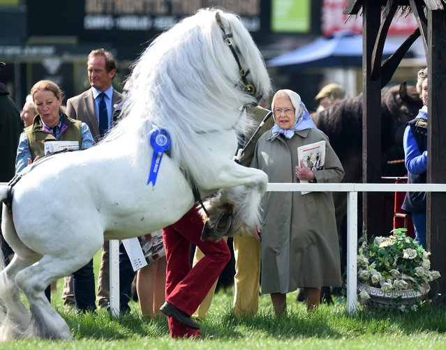 A horse jumps next to Britain's Queen Elizabeth II during the Windsor Royal Horse Show, in Windsor near London, Britain, 13 May 2016. (Photo by Facundo Arrizabalaga/EPA)