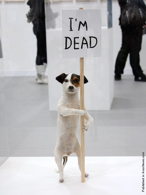 "A taxidermied artwork of a Jack Russell dog entitled ""I'm Dead"""