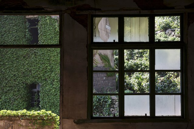 A building which is covered with leaves is seen through broken windows of an empty house at the abandoned fishing village of Houtouwan on the island of Shengshan July 26, 2015. (Photo by Damir Sagolj/Reuters)