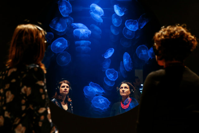 Immersive jellyfish installation by Rimini Protokoll in Eco-Visionaries exhibition at Royal Academy of Arts on November 20, 2019 in London, England. The theatrical installation is a tank of 50 moon jellyfish, one of the few species which actually benefit from the effects of global warming. (Photo by Hollie Adams/Getty Images)