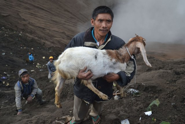 A man holds a goat released by Hindu devotees of the Tengger tribe during the Yadnya Kasada festival, on the crater of Mount Bromo in Probolinggo on July 21, 2016. (Photo by Aman Rochman/AFP Photo)