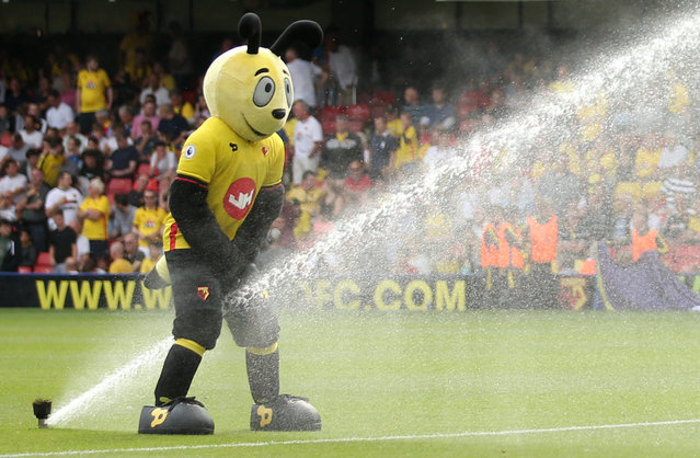 Football Soccer Britain, Watford vs Arsenal, Premier League, Vicarage Road on August 27, 2016. Watford mascot stands by the sprinklers before the game. (Photo by Andrew Boyers/Reuters/Action Images/Livepic)