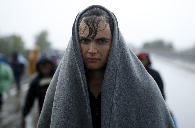 A migrant protects himself from the rain as he walks towards the Hungarian border after arriving at the train station in Botovo, Croatia September 24, 2015. A trade war erupted between Serbia and Croatia on Thursday over the flow of migrants across their border, dragging relations between the ex-Yugoslav republics to their lowest ebb since the overthrow of late Serbian strongman Slobodan Milosevic in 2000. (Photo by Antonio Bronic/Reuters)