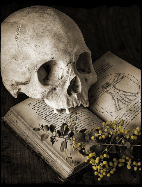 """""""Skull and Wattle"""". (Kevin Best)"""