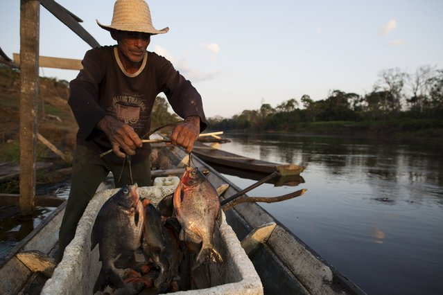 Francisco da Silva Vale, 61, cools off fish with ice produced on solar-powered ice machines at Vila Nova do Amana community in the Sustainable Development Reserve, in Amazonas state, Brazil, September 23, 2015. Three solar-powered machines, are producing about ninety kilos of ice per day, in a region with poor access to electric energy, which used to be produced only with diesel oil, in the Amazon rain forest. (Photo by Bruno Kelly/Reuters)