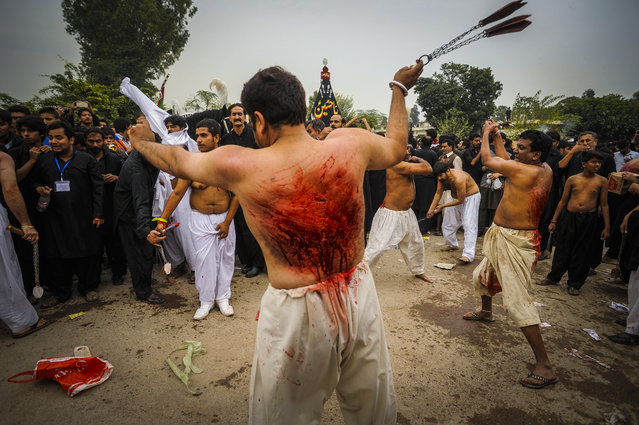 Pakistani Shiite Muslims flagellates themselves during mourning procession a day ahead of Ashura commemoration, in Islamabad, Pakistan, November 3, 2014. Shiite Muslims across the world are observing Muharram, the first month of the Islamic calendar. The climax of Muharram is the Ashura festival commemorating the martyrdom of Imam Hussein, a grandson of the Prophet Mohammed in the Iraqi city of Karbala in the seventh century. (Photo by T. Mughal/EPA)