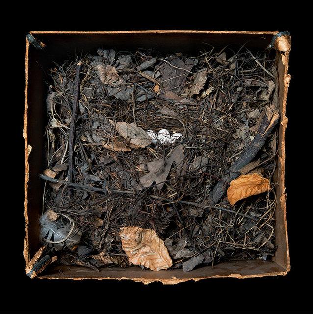 Bird Nest By Sharon Beals Part2