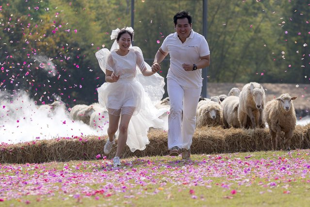 Groom Artit Thanajindawong and bride Daradai Wachirapoothacoon run from sheep during their wedding ceremony at a resort in Ratchaburi province February 13, 2015. (Photo by Athit Perawongmetha/Reuters)