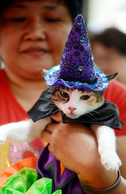 A woman holds her pat cat dressed as a witch during the Scaredy Cats and Dogs Halloween costume competition in Manila. (Photo by Noel Celis/AFP Photo)