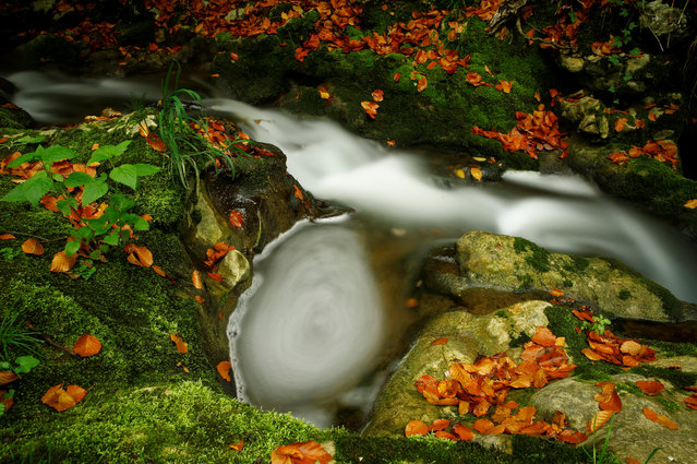Le Veyron stream is pictured on an autumn morning at La Tine de Conflens in La Sarraz, Switzerland October 4, 2017. (Photo by Denis Balibouse/Reuters)