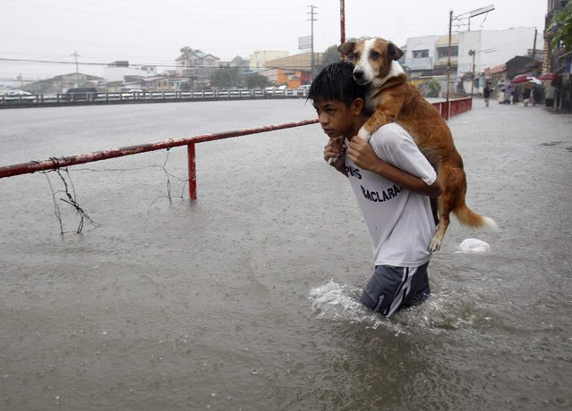 A boy carries his dog whilst wading in floodwaters brought by the monsoon rain, intensified by tropical storm Trami, in Paranaque city, metro Manila August 20, 2013. (Photo by Romeo Ranoco/Reuters)