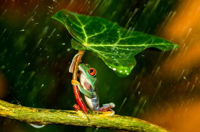 """Ohh no :( Raining"". (Photo by Kutub Uddin)"