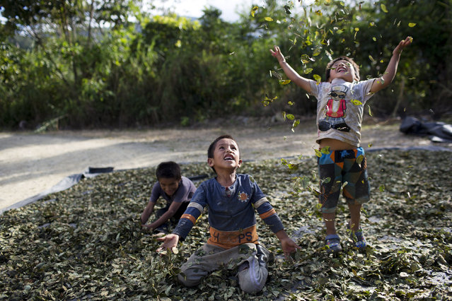 "In this March 13, 2015 photo,  Yohan, 4, from left, Cristian, 7, and Angelo, 6, playfully toss coca leaves into the air, singing: ""I have a lot of money, look at all the money I have"", in La Mar, province of Ayacucho, Peru. Hauling cocaine out of the remote valley is about the only way to earn decent cash in this region where a farmhand earns less than $10 a day. Beyond extinguishing young lives, the practice has packed Peru's highland prisons with cocaine backpackers while their bosses evade incarceration. (Photo by Rodrigo Abd/AP Photo)"