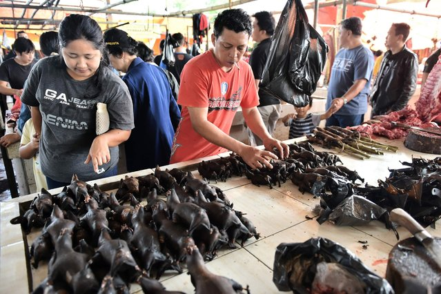 This picture taken on February 18, 2017 shows a vendor arranging bat meat in Tomohon market in northern Sulawesi, Indonesia. (Photo by Bay Ismoyo/AFP Photo)