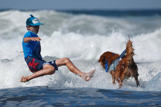 "A boy falls while his dog keeps riding as they compete in the 14th annual Helen Woodward Animal Center ""Surf-A-Thon"" where more than 70 dogs competed in five different weight classes for ""Top Surf Dog 2019"" in Del Mar, California, U.S., September 8, 2019. (Photo by Mike Blake/Reuters)"