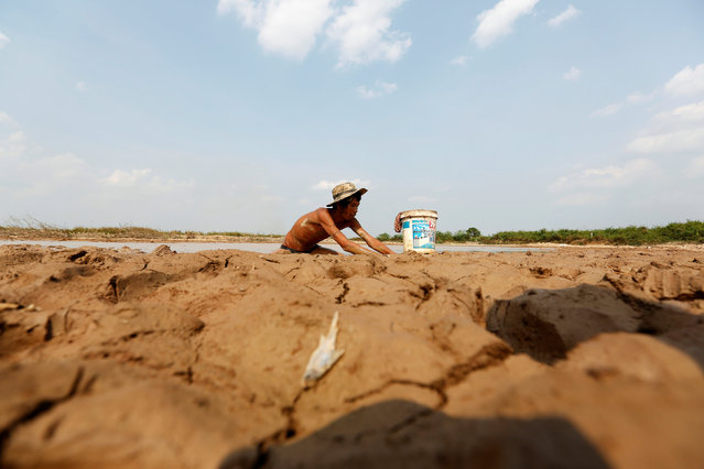 A fisherman catches fish at a Bak Angrout dried up pond at the drought-hit Kandal province in Cambodia May 13, 2016. (Photo by Samrang Pring/Reuters)