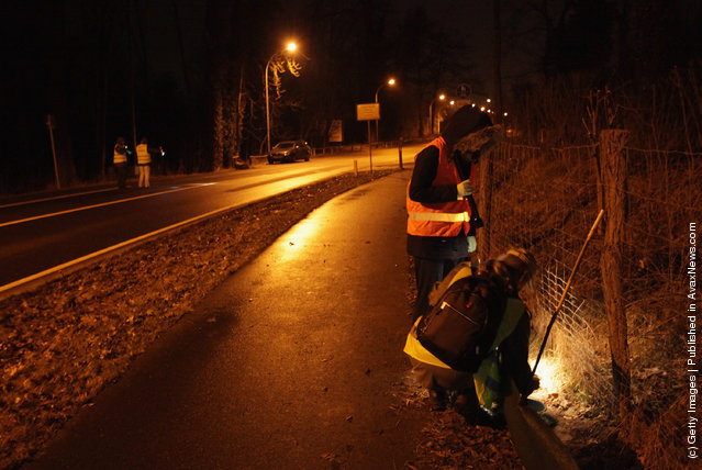 Volunteers collect toads along an amphibian fence next to a road near Berlin