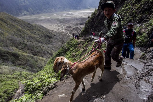A picture made available on 21 July 2016 shows Indonesian Tenggerese Hindu worshipers bringing a goat to be blessed by a Hindu shaman at Widodaren cave  as part of the Tenggerese Hindu Yadnya Kasada festival  in Probolinggo, East Java, Indonesia, 20 July 2016. (Photo by Fully Handoko/EPA)