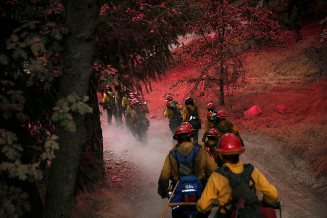 Firefighters with the Kings River Hotshots hike through trees covered in pink fire retardant after building a fire line to protect homes in the Deer Lodge Park area during the Pilot Fire in San Bernardino county near Lake Arrowhead, California, U.S. August 9, 2016. (Photo by Patrick T. Fallon/Reuters)