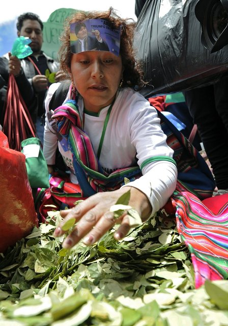 """A woman fills bags with coca leaves during a celebration for the reincorporation of Bolivia to the UN Convention Against Illicit Traffic in Narcotic Drugs in La Paz on January 14, 2013. """"The coca leaf is not any more seen as cocaine (..), it is a victory of our identity"""" said Bolivian President Evo Morales. AFP PHOTO/Jorge Bernal        (Photo credit should read JORGE BERNAL/AFP/Getty Images)"""