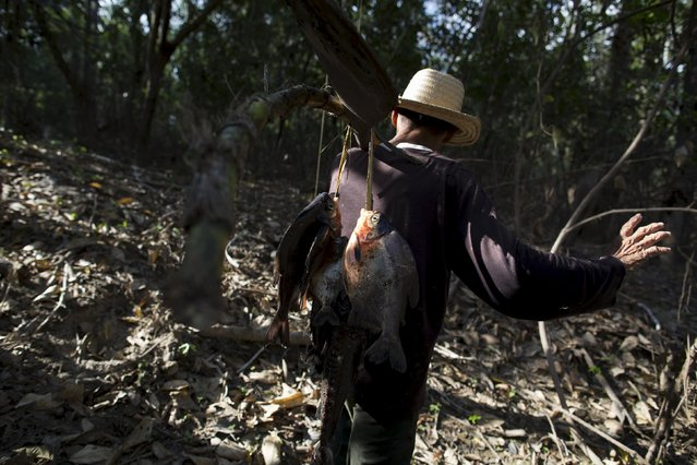 Francisco da Silva Vale, 61, carries fish after a fishing session at Vila Nova do Amana community in the Sustainable Development Reserve, in Amazonas state, Brazil, September 23, 2015. (Photo by Bruno Kelly/Reuters)