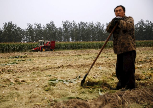 A farmer takes a break at a corn field as a harvester (rear) reaps corn at a farm in Gaocheng, Hebei province, China, September 30, 2015. The world's biggest makers of tractors and combines are finding a rare opportunity for growth in China despite a sharp slowdown in the world's second-largest economy, with big farm machines in demand as the rural labour force shrinks and plot sizes grow. (Photo by Kim Kyung-Hoon/Reuters)