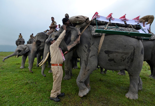 "A forest official puts a ""tilak"" on the forehead of a mahout before the start of an elephant safari at Kaziranga National Park in Assam, October 1, 2016. (Photo by Anuwar Hazarika/Reuters)"