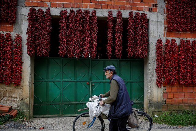 A man pushes a bicycle as bunches of paprika hang on the wall of a house to dry in the village of Donja Lakosnica, Serbia October 6, 2016. (Photo by Marko Djurica/Reuters)