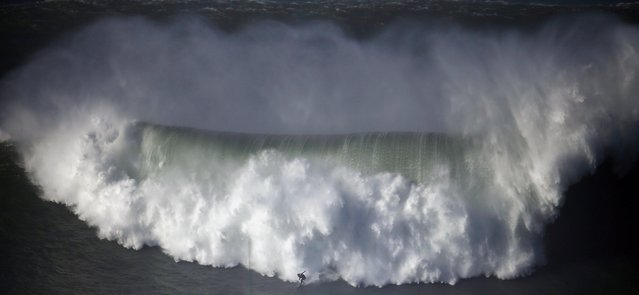 A surfer drops in on a large wave at Praia do Norte, in Nazare December 11, 2014. (Photo by Rafael Marchante/Reuters)