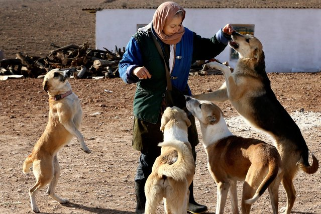 In this Friday, December 5, 2014 photo, a visitor plays with dogs at the Vafa Animal Shelter in the city of Hashtgerd 43 miles (73 kilometers) west of the capital Tehran, Iran. The shelter also struggles to find homes for dogs, with only around six being adopted each month. Iranians, like many other prospective dog owners, prefer purebreds to strays, something the shelter is trying to change. (Photo by Vahid Salemi/AP Photo)