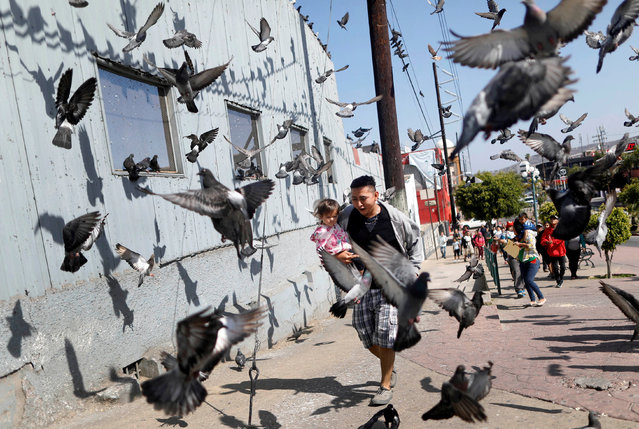 A man and his daughter, members of a migrant caravan from Central America, run between pigeons at the end of their journey through Mexico, prior to preparations for an asylum request in the U.S., in Tijuana, Baja California state, Mexico April 28, 2018. (Photo by Edgard Garrido/Reuters)