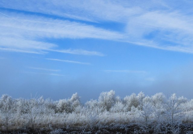 "Trees are covered with frost near the A6 highway, also known as the ""Autoroute du Soleil"" (Highway of the Sun), near Dijon, January 6 , 2015. (Photo by Yves Herman/Reuters)"