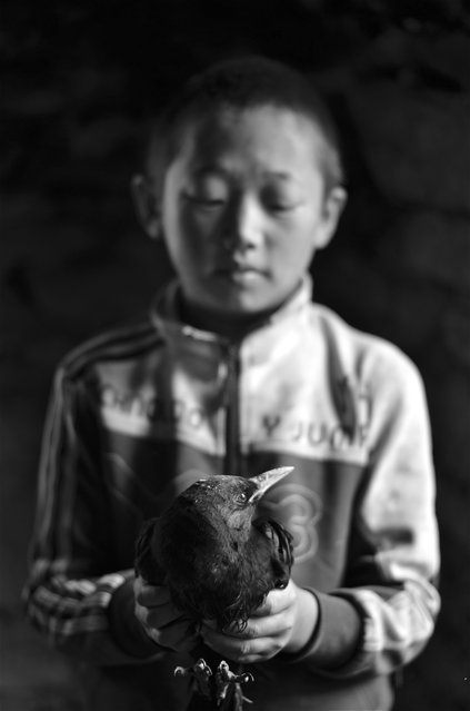 """Hitchcock"". While visiting an orphanage in a Tibetan area of Sichuan, China the boys were fascinated with a sick bird looking for refuge in their kitchen. I was able to capture this image as they were passing the bird around from boy to boy. (Photo and caption by Nicole Todd/National Geographic Traveler Photo Contest)"