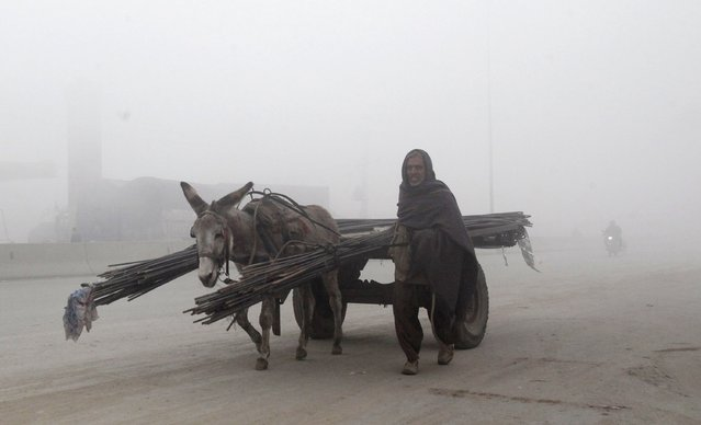 A man walks beside his donkey and cart carrying steel bars on a foggy morning in Lahore, Pakistan January 14, 2016. (Photo by Mohsin Raza/Reuters)