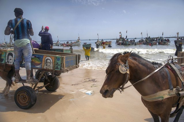 Men wait to load their horse-drawn carts with the catch brought by fishermen at Bargny beach, some 35 kilometers (22 miles) east of Dakar, Senegal, Thursday April 22, 2021. (Photo by Leo Correa/AP Photo)