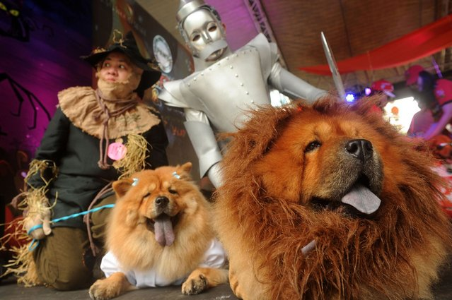 Pet owners and their pet dogs dressed as characters from the Wizard of Oz participate at the Scaredy Cats and Dogs Halloween costume competition in Manila. (Photo by Romeo Ranoco/Reuters)