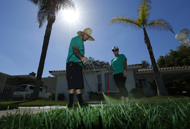Drew McClellan of A Lucky Lawn and his wife Deb paint green dye onto drought-affected grass at a home in Santa Fe Springs, October 1, 2014. (Photo by Mike Blake/Reuters)