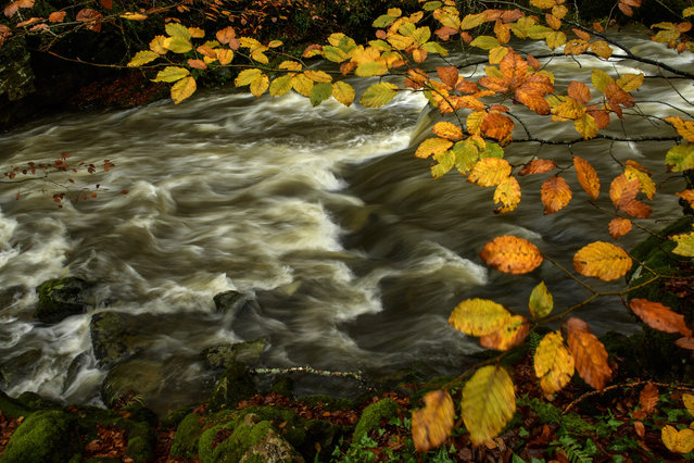 The Irati River flows past autumn leaves as the rain fall during an autumn day near to the small Pyrenees town of Arce, northern Spain, Thursday, November 9, 2017. (Photo by Alvaro Barrientos/AP Photo)