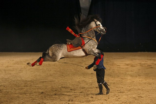 An Andalusian horseman performs with his animal during the Sacab Andalusian Horse Show in Coin, southern Spain, April 12, 2015. (Photo by Jon Nazca/Reuters)